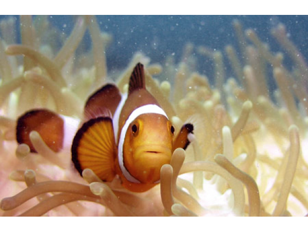 Savasodnak az óceánok